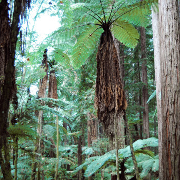 NA101-Redwood-Forest-Rotorua-Tourism-New-Zealand